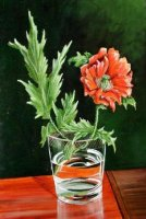 [ poppie_in_glass_335_500_large.jpg:  Poppy in Glass<BR>Oil on Board 14 x 10 ]